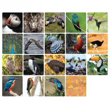 WWF Matching Game - Birds