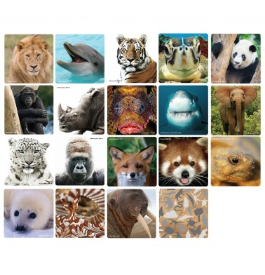 WWF Matching Game - #Selfies