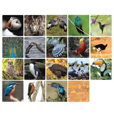 WWF Matching Game - Birds